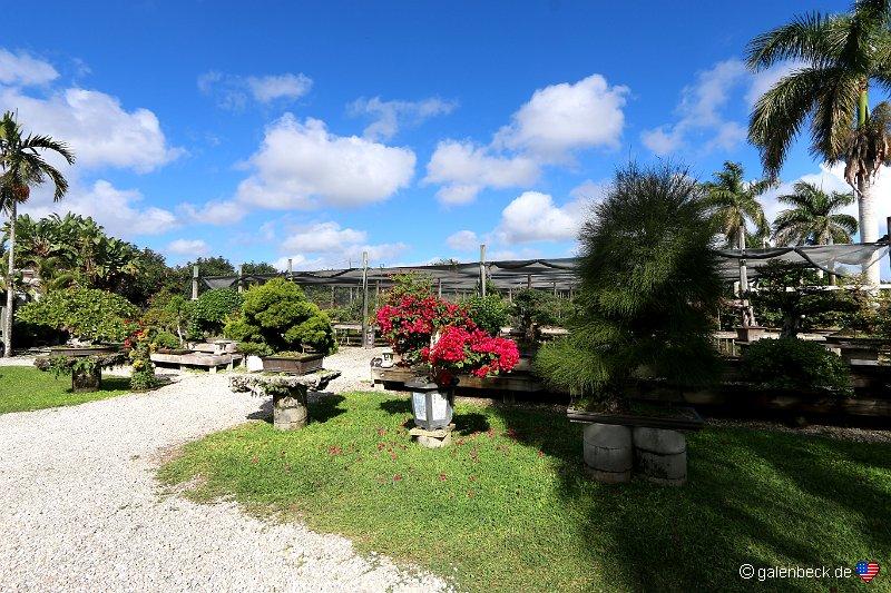 Stan und olli bruzeln in florida usa februar 2014 - The garden web forum ...